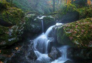 تصویری زیبا از جنگل های فومن و خروش آبهای روان بر بستر گیتی