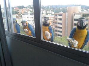 عکسهای متفاوتی از حیوانات پشت پنجره