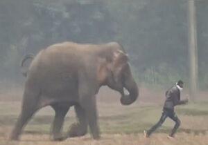 فیلم/ حمله فیل عصبانی به مزاحمان!
