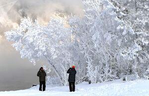 عکس/ درختان برفی یخ زده