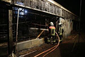 عکس/ سوختن حیوانات در آتش سوزی باغ وحش آلمان