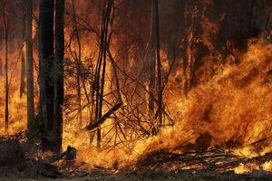 آتش در سرزمین کانگوروها