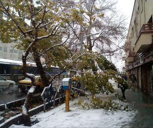 عکس/ شکستگی شاخه درختان در تهران