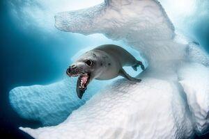 تصاویر برگزیده مسابقه عکاسی در اقیانوس