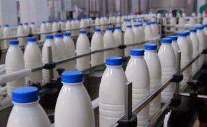 چه میزان سم «آفلاتوکسین» شیر و مواد غذایی خطرناک است؟