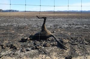 دلیل آتشسوزیهای استرالیا چیست و چرا نمیتوانند آن را مدیریت کنند؟ +عکس و فیلم