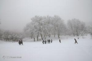 عکس/ برف زمستانی در جنگل توسکستان