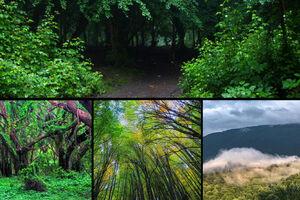 جنگل های شمال همچنان آب می رود +عکس