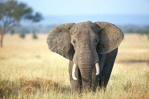 ورود ناگهانی فیل به لابی هتل همه را شوکه کرد! +فیلم