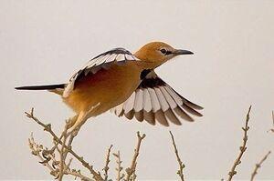 پرنده انحصاری ایران چه نام دارد؟ +عکس