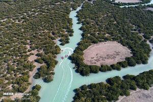 تصاویر زیبا از جنگل حرا روستای سهیلی