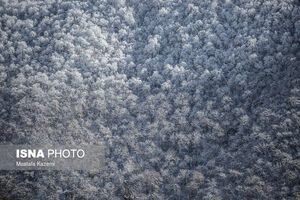 عکس/ طبیعت زمستانی «چهاردانگه»