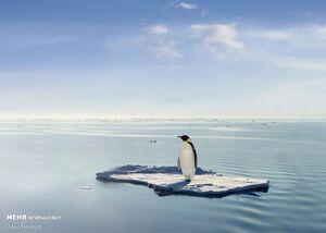 تصاویر دیدنی از پنگوئنها