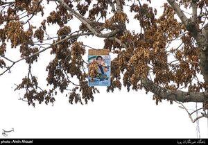 عکس/ شور تبلیغات انتخابات در سراسر کشور