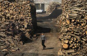 عکس/ کارخانه تولید ذغال در مصر