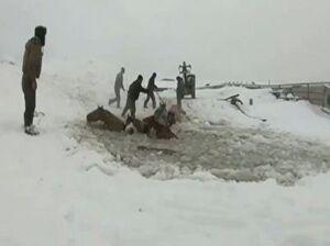 فیلم/ نجات یک گله اسب از رودخانه یخ زده