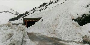 عکس/ کوهنوردان حادثه دیده در کوههای تهران