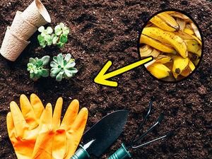 کاربردهای جالب و عجیب پوست موز برای تمیز کردن خانه