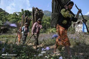 عکس/ زندگی کشاورزان میانماری