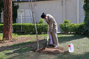 عکس/ کاشت نهال در هفته درختکاری توسط رهبر انقلاب