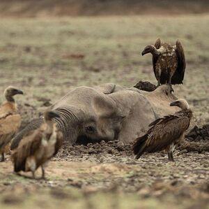 عکس/ دنیای حیوانات