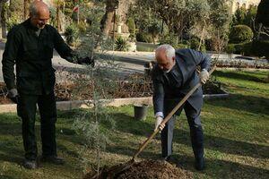 کاشت یک اصله نهال در محوطه وزارت خارجه توسط ظریف +عکس