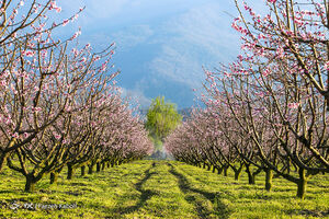 طبیعت زیبای بهاری گلستان