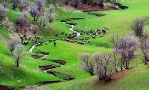 تصویری زیبا از طبیعت سرسبز خرم آباد