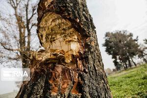 عکس/ درخت خواران!
