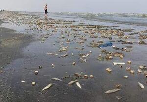 ائتلاف سعودی آبهای سواحل عدن را آلوده مواد شیمیایی کرده