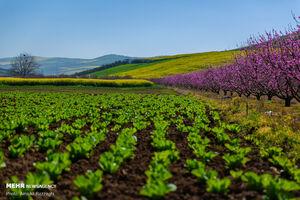 عکس/ رسید مژده که آمد بهار
