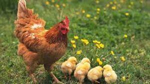 ویروس کرونا؛ آیا حیوانات خانگی باعث انتقال آلودگی میشوند؟