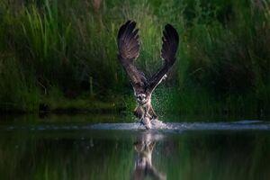 عکس/ لحظه شکار دیدنی عقاب
