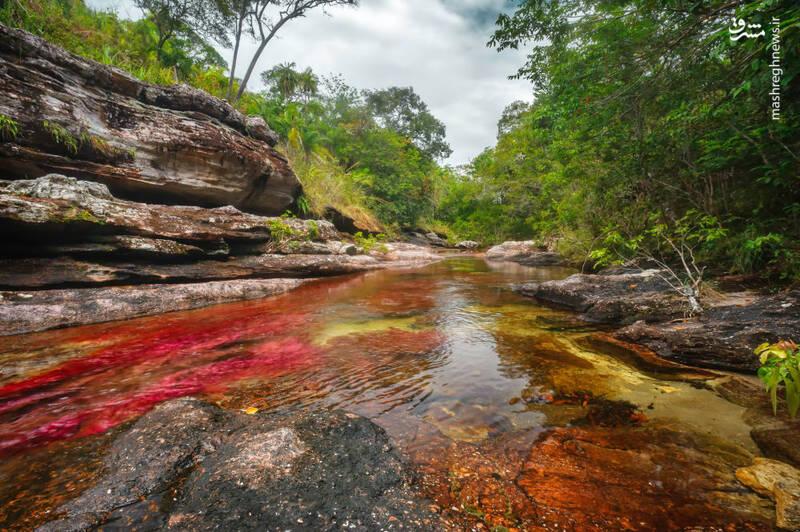 رودخانه رنگین کمان کانو کریستال در کلمبیا