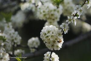تهران در آستانه بهار