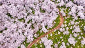 بهار زیر سایه کرونا