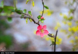 عکس/ صدای پای قدمهای بهار
