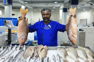 """عکس/ بازار """"ماهی"""" بندرعباس"""