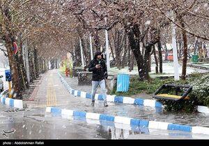 عکس/ بارش برف بهاری در همدان