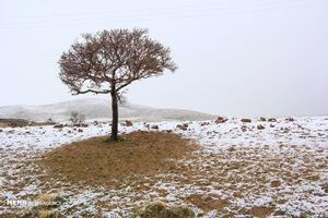 عکس/ قابِ زمستانیِ بهار