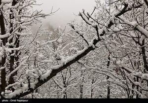 فیلم/ برف بهاری گیلان را سفیدپوش کرد