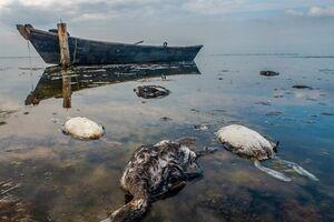 علت اصلی مرگ و میر غیرطبیعی پرندگان مهاجر در خلیج گرگان