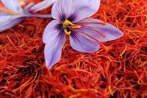 سود زعفران ایرانی در جیب تجار اسپانیایی و افغانستانی