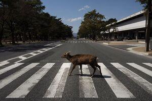 عکس/ ورود گوزن به شهر در روزهای کرونایی