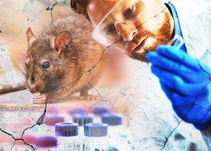 آیا باید نگران ویروس هانتا باشیم؟