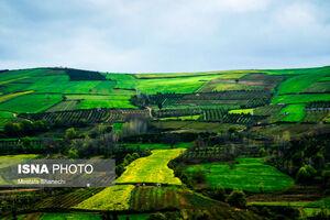 عکس/ مزارع دیدنی کلزا در مازندران