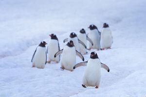 عکس/ رژه دیدنی در قطب جنوب