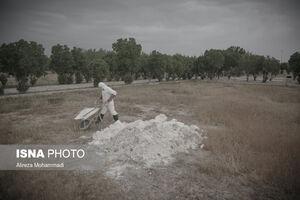 عکس/ باغ فردوس، محل دفن قربانیان کرونایی