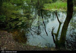 عکس/ تالابی زیبا در استان مازندران