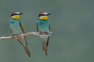 عکس/ دنیای رنگارنگ پرندگان